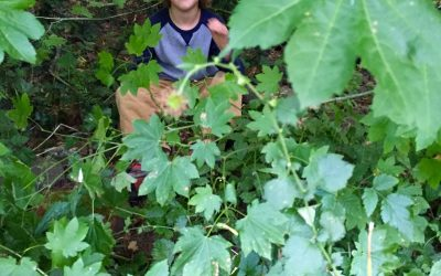 Summer Camp: Teaching with Nature (with Sample Curriculum & Activity!)