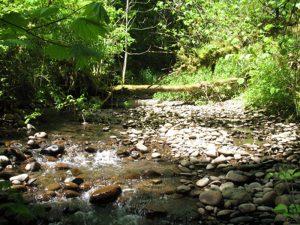 Still Meadow Retreat creek