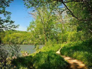 path and trees near lake