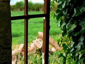 window opening to green space