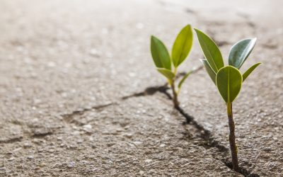 """""""Hope Is Nature Talking to Us"""": 6 Tips for Nurturing Hope"""