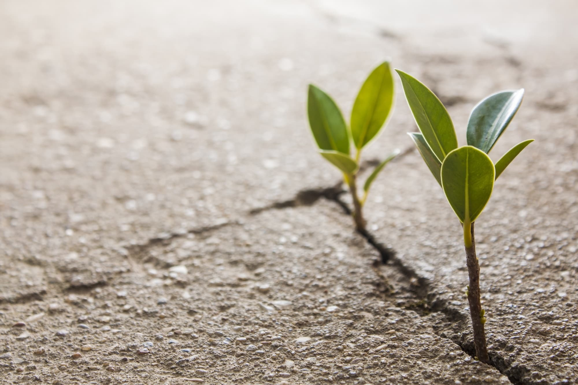 plants growing through cracks in asphalt