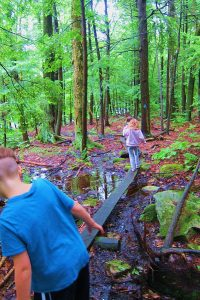 children exploring forest